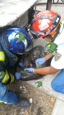 Elementos del #Erum rescataron a mascota de incendio en Av Revolución, ya fue reanimada, vía @tritonazteca11