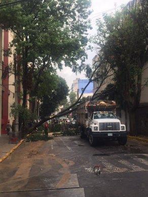 Árbol derribado en Galicia esq actipan. Calles cerradas por trabajo de bomberos, vía @s....