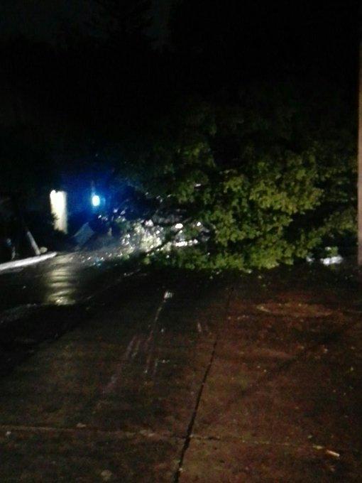 Caída de árbol en calle bahía magdalena en la Col. Anzures. Vía @jcarlos0266
